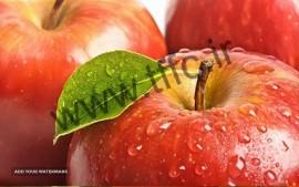 سیب برای صادرات