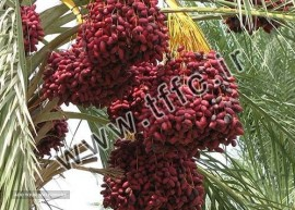 Date for Export