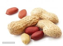 فروش و صادرات بادام زمینی